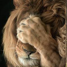 León tapándose los ojos